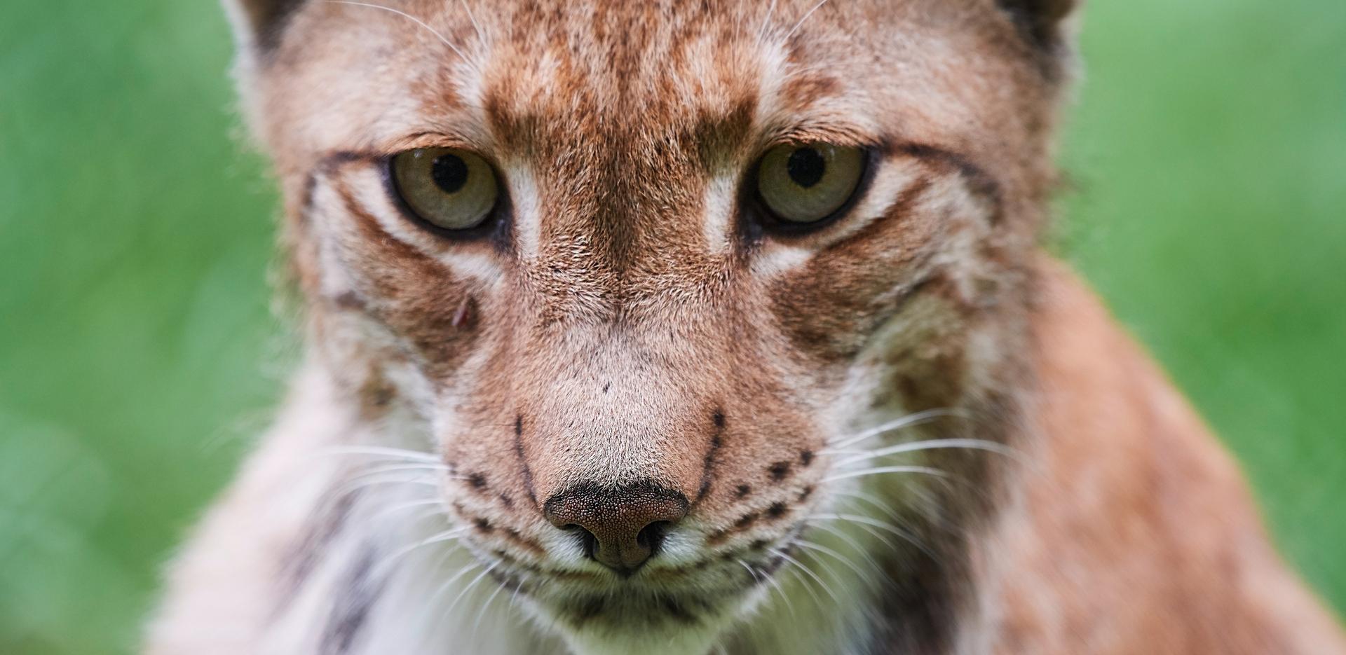 Tierfotografie live - Canon Academy