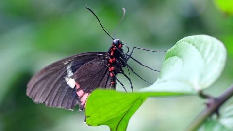 Makrofotografie im Schmetterlingshaus - Canon Academy