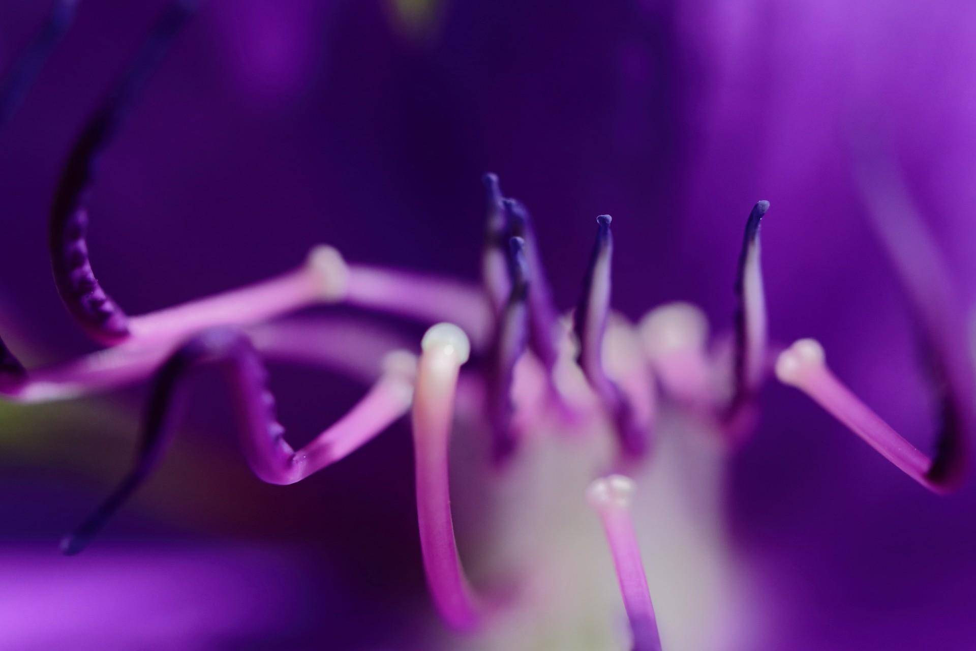 Makroworkshop - Stachelwelten im Botanischen Garten - Canon Academy Natur-, Tier- und Makro