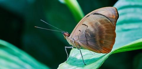 Natur- & Makrofotografie - Canon Academy Natur-, Tier- und Makro