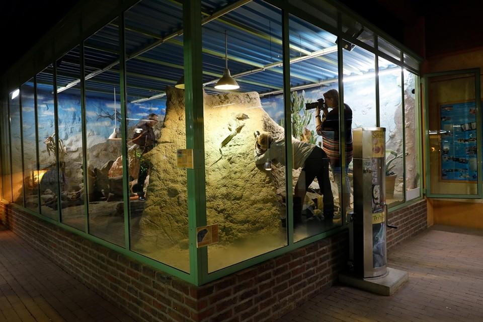 Reptilien- und Makrofotografie im TerraZoo Rheinberg - Canon Academy