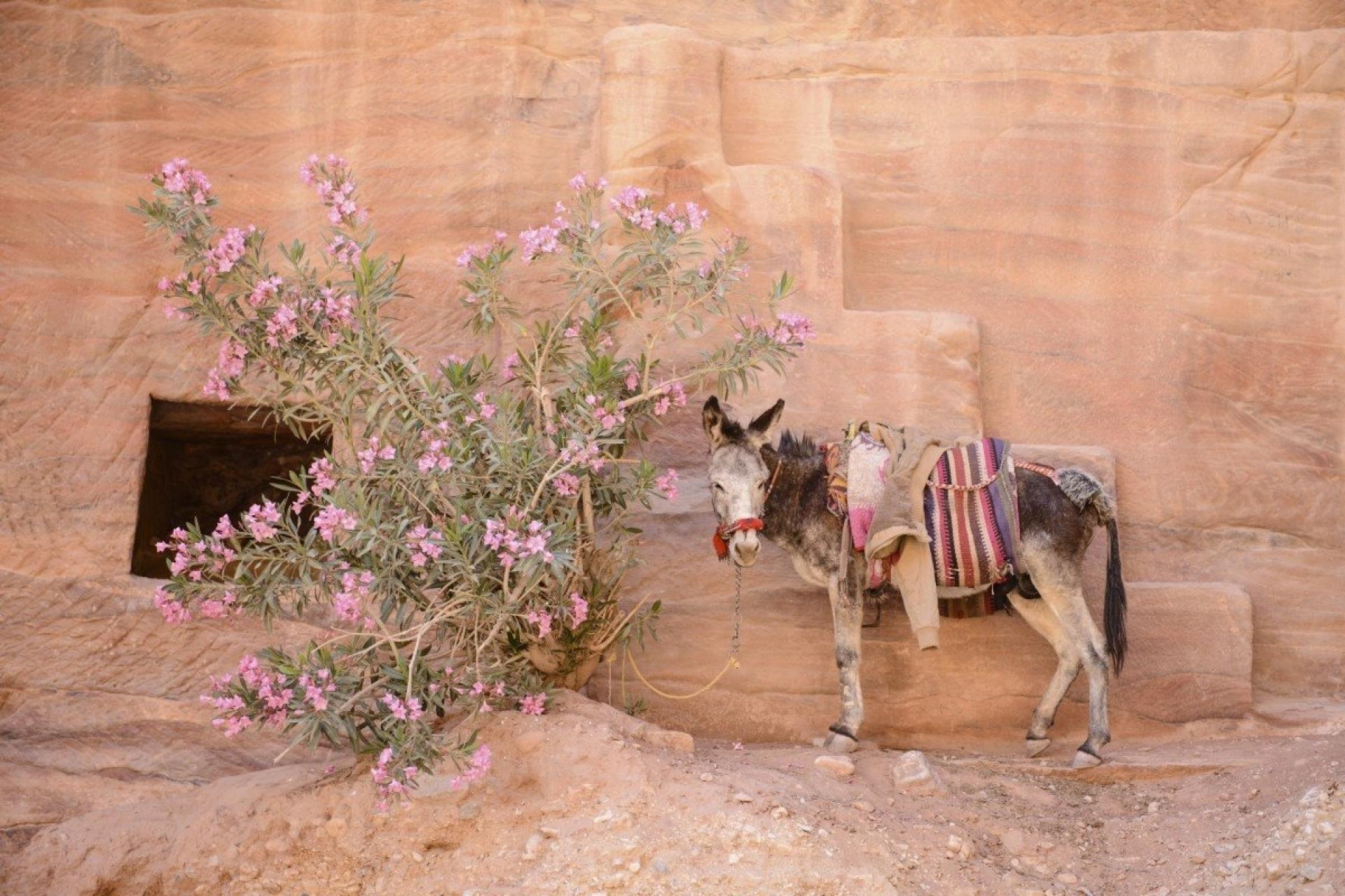 Jordanien - Canon Academy Landschaft- und Reise