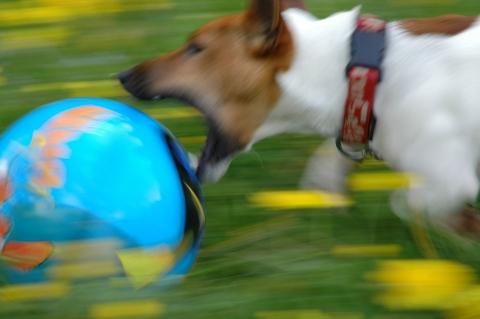 Hundeworkshop an den Osterseen in Iffeldorf - Canon Academy Natur-, Tier- und Makro