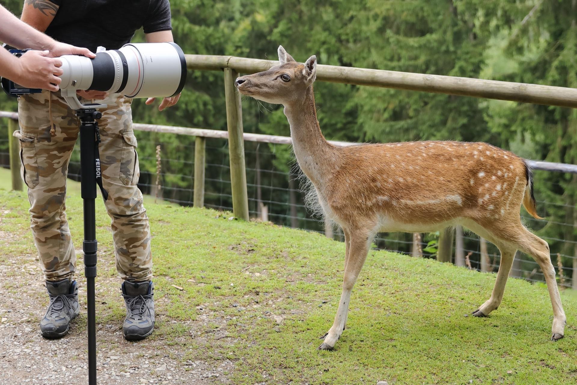 Fotosafari im Wildfreigehege Hellenthal - Canon Academy Natur-, Tier- und Makro
