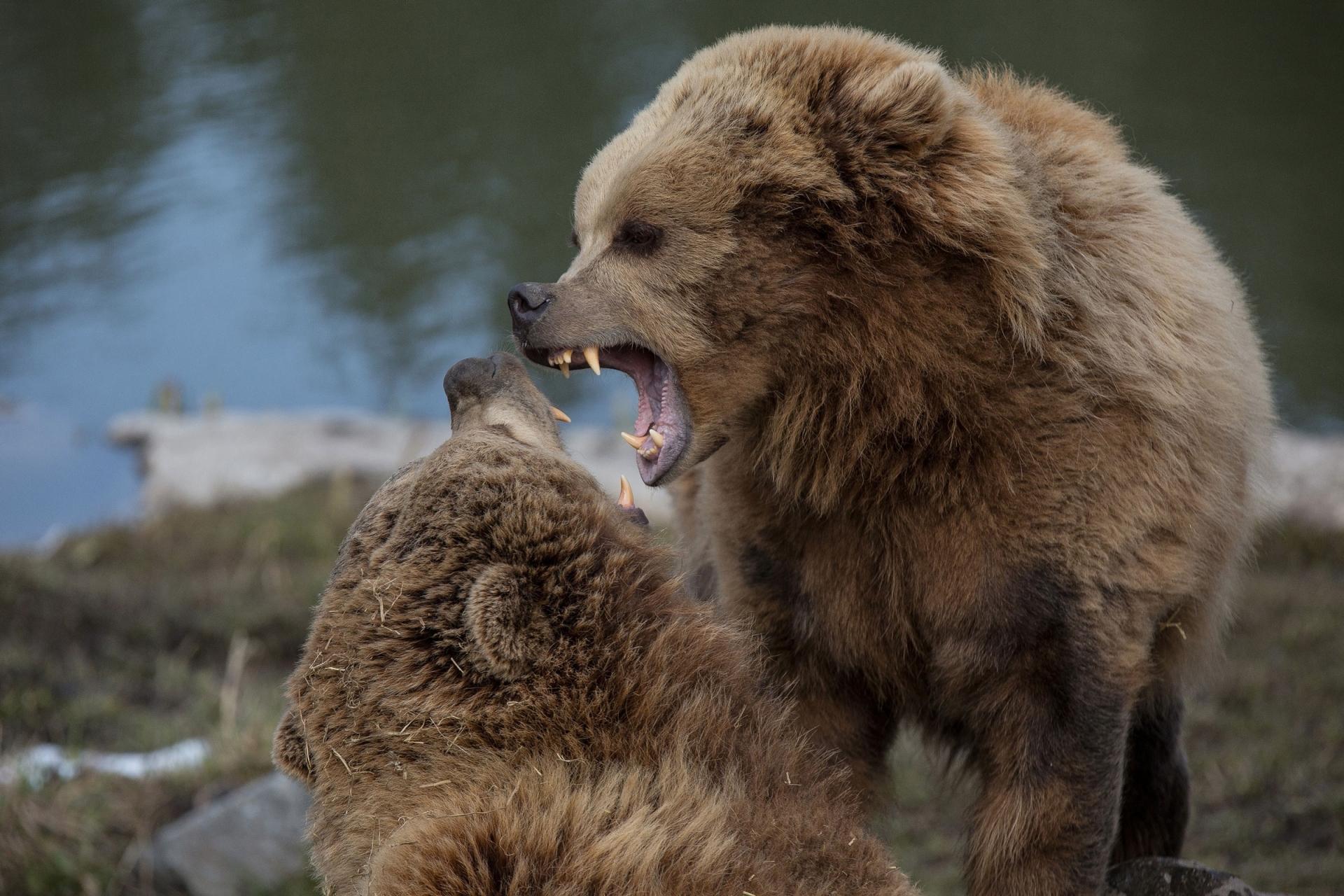 Fotosafari im Wildpark Poing - Canon Academy Natur-, Tier- und Makro
