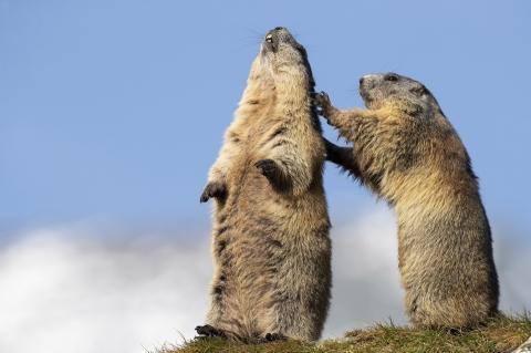 Canon Tier-Fotoworkshop in den Alpen mit Ambassador Thorsten Milse - Canon Academy Natur-, Tier- und Makro