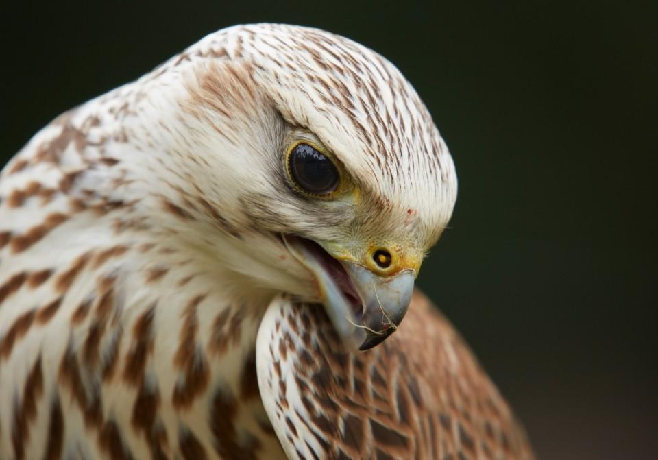 Auge in Auge mit Greifvögeln - Canon Academy