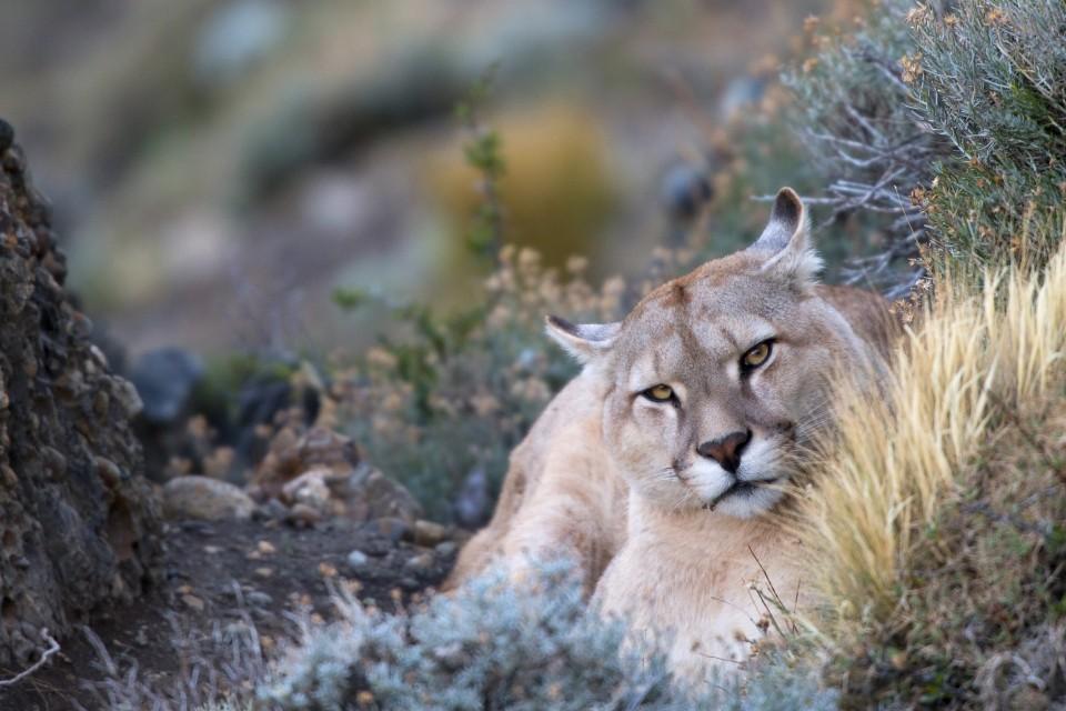 Fotosafari Patagonien mit CANON-Ambassador Thorsten Milse - Canon Academy Landschaft und Reise