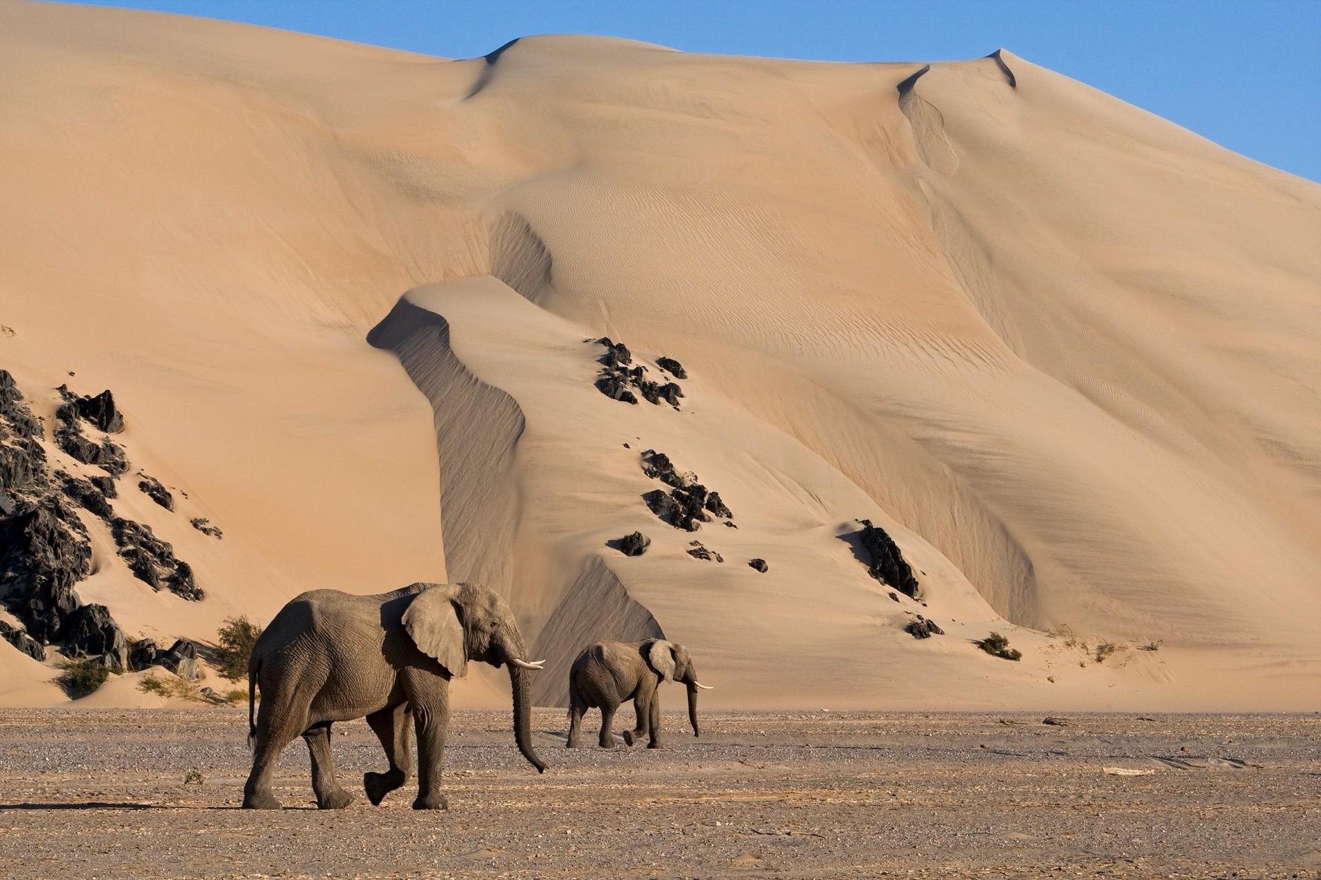 Fotosafari Namibia mit CANON-Ambassador Thorsten Milse - Canon Academy