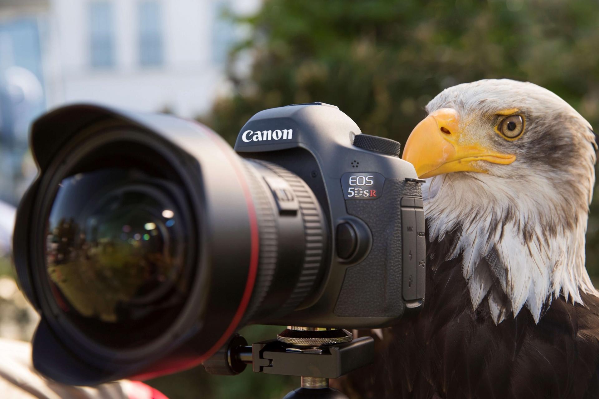 Canon EOS Vollformat Kameras