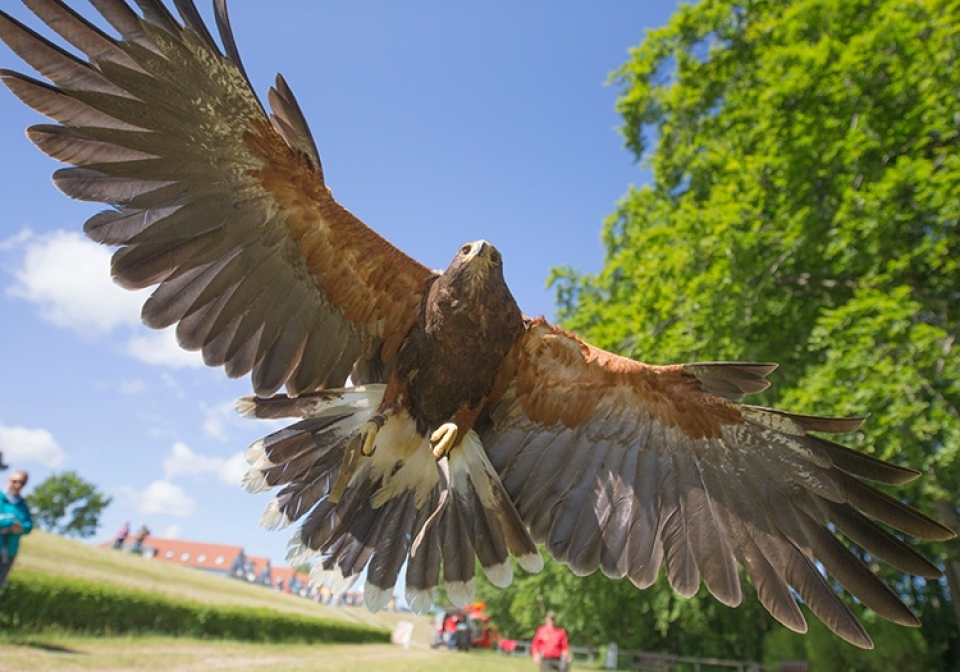 Greifvogel Workshop - Canon Academy Natur-, Tier- und Makro