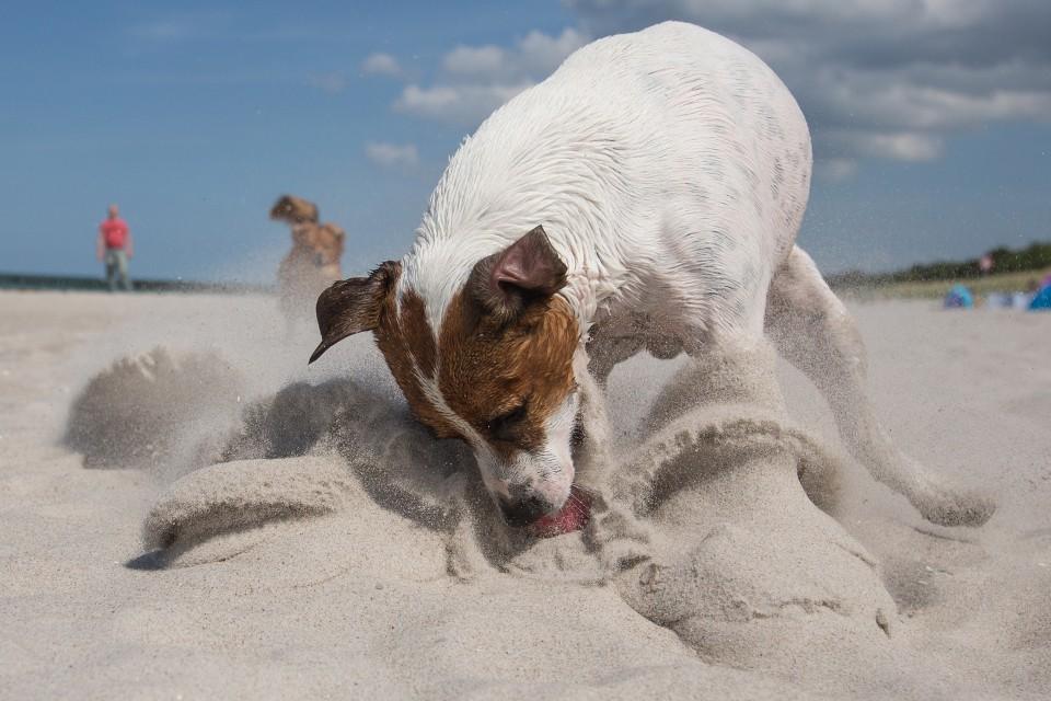 Hundefotografie - Canon Academy Natur-, Tier- und Makro