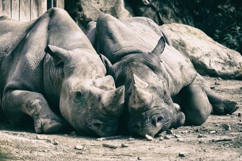 EOS Explorer: Das EOS-System in der Praxis – Tier- und Makrofotografie im Krefelder Zoo - Canon Academy
