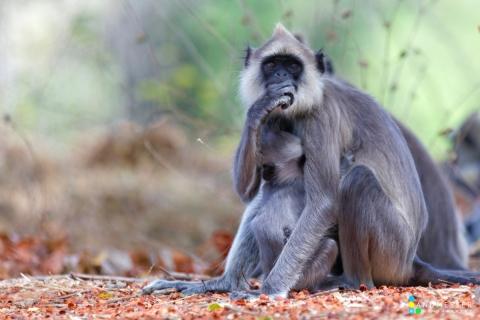 Opel Zoo - Canon Academy Natur-, Tier- und Makro