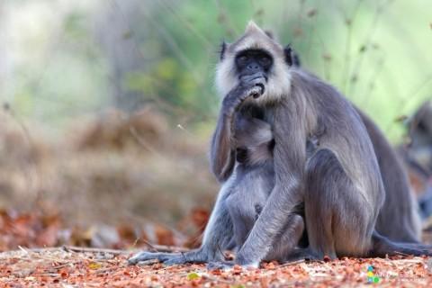 Tierfotografie im Opel Zoo - Canon Academy