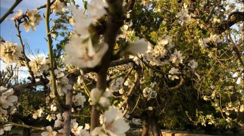 Canon Photo Camp zur Mandelblüte auf Mallorca - Canon Academy Landschaft- und Reise