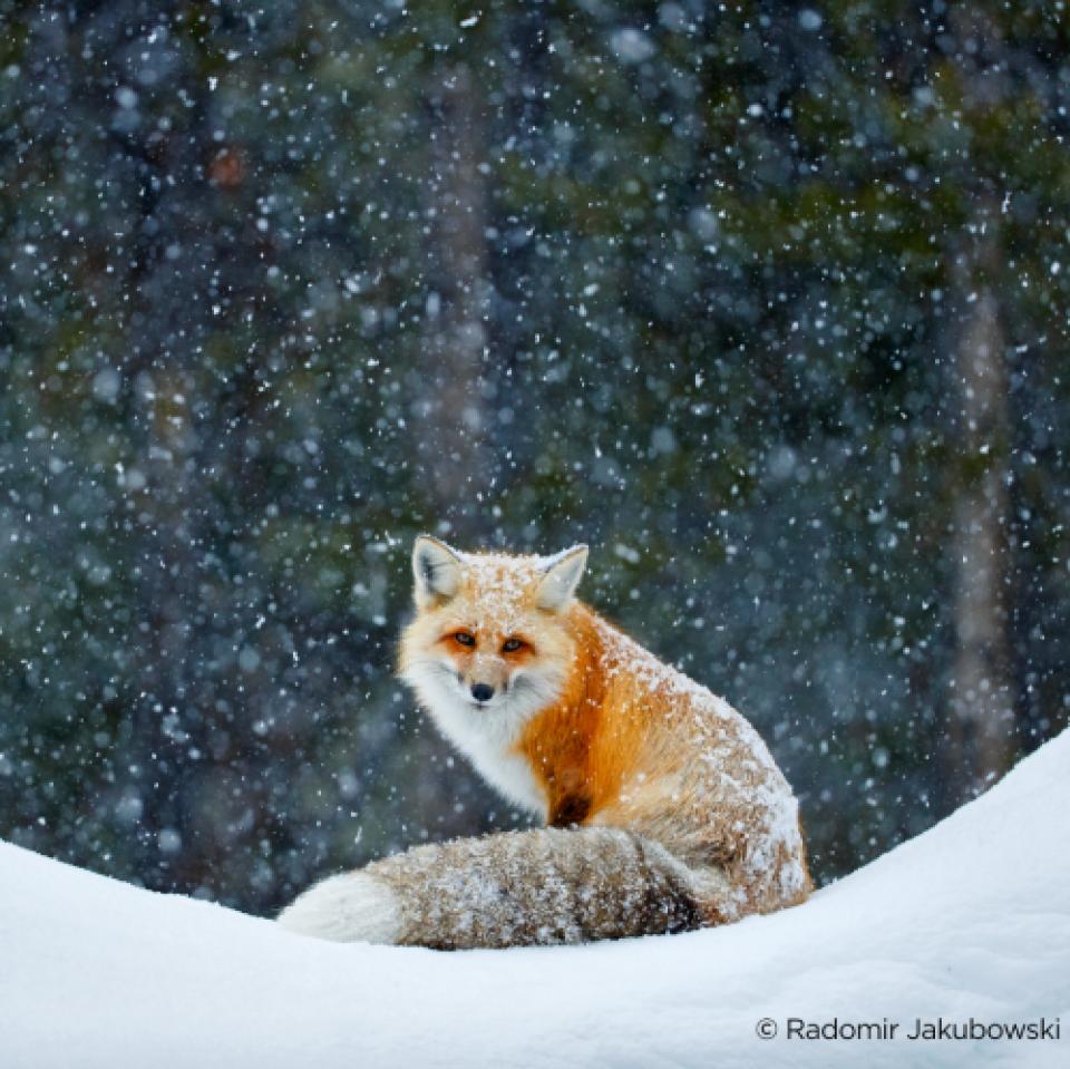 Zeige uns deine Winterfarben: Schau dir die Gewinnerfotos