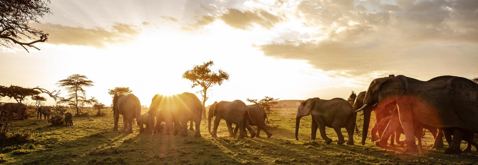 Wildlife Foto, EOS R, Fotografie