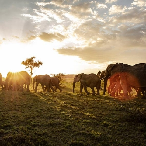 HDbook Webinar: Tomas Rodriguez und die Wildlife-Fotografie in Kenia - Canon Academy Webinare