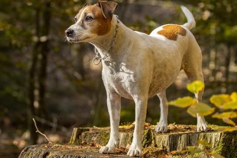 Hundefotografie - Canon Academy