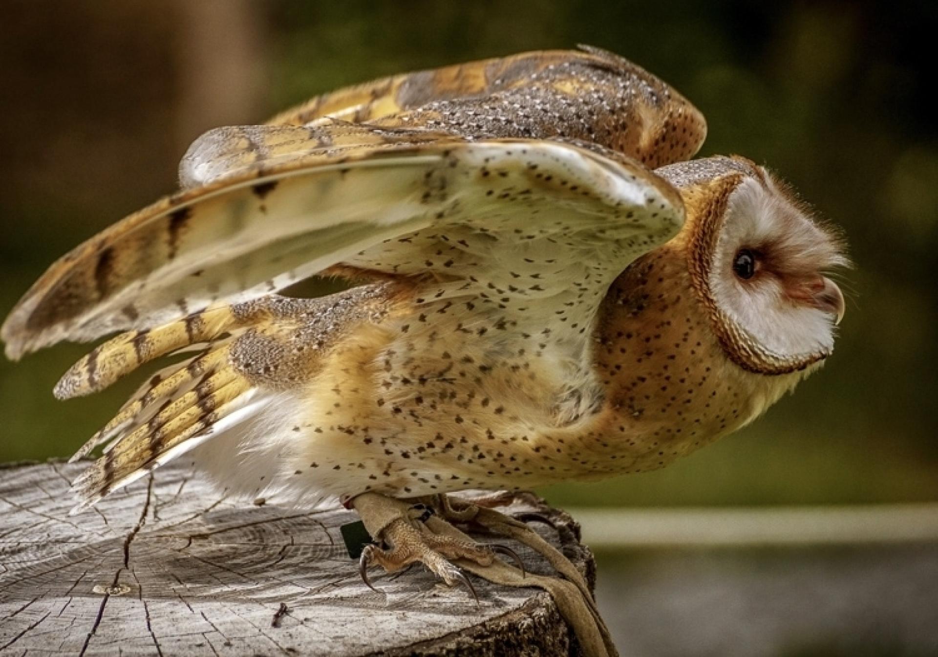Canon Foto Vogelflug im Weltvogelpark Walsrode - Schwerpunkt Autofokussystem - Canon Academy Natur-, Tier- und Makro