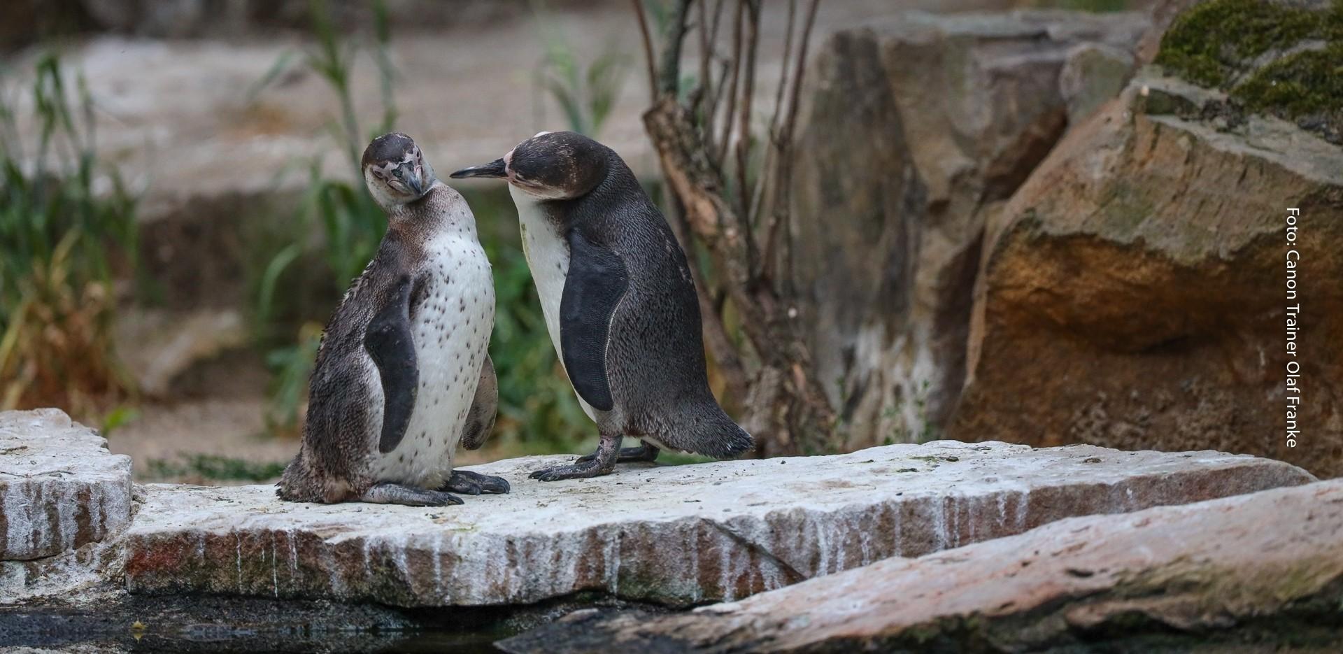 Fotografieren hinter verschlossenen Türen - Zoonacht Berlin - Canon Academy Natur-, Tier- und Makro