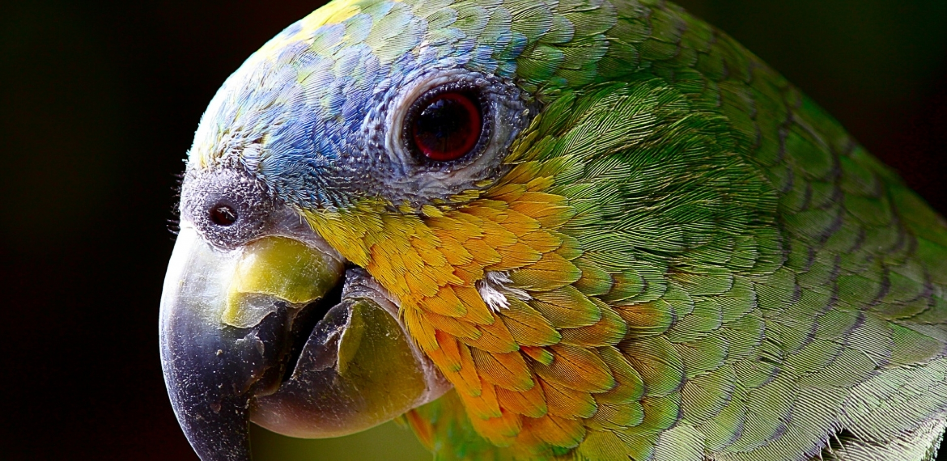 Canon Foto Vogelpark Walsrode - Schwerpunkt Autofokussystem - Canon Academy