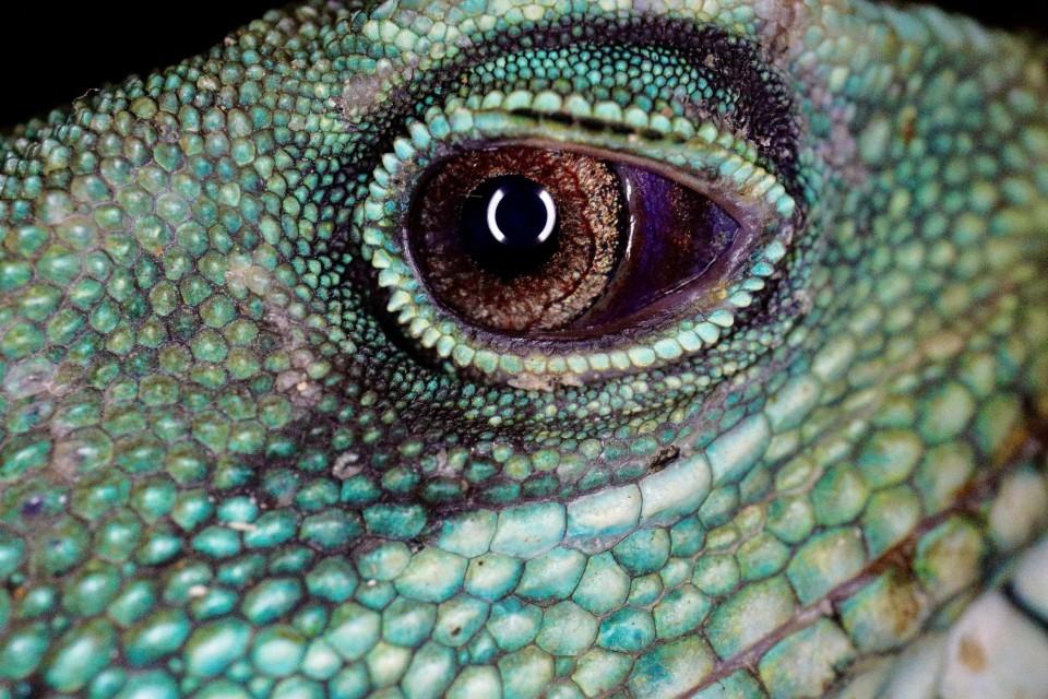 Petra Selbertinger Wildlife Reptil Auge