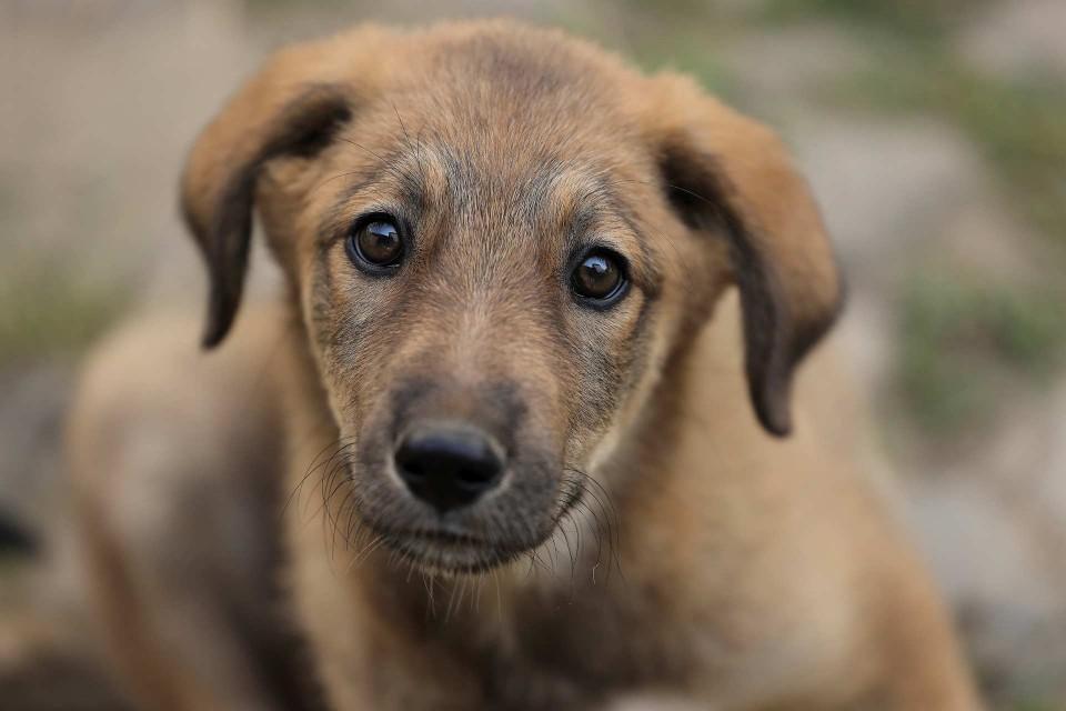 Petra Selbertinger Tiere Hund
