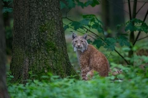 Tierfotografie - Canon Academy Natur-, Tier- und Makro